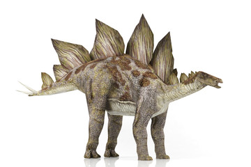 3D model Stegosaurus isolated on white background