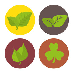 Green nature and leaves design.