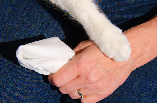 A cats paw is gently touching the hand of an upset woman who has a tissue in her hand, which shows how important pets can be to people