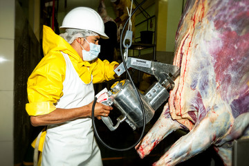 Butcher Using A Cattle Carcass Brisket Opening Saw