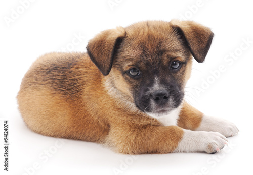 rare dog names - HD1200×804