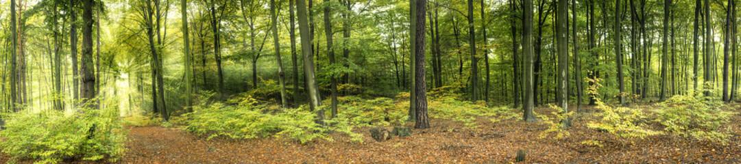 Wald mit Sonnenstrahlen, Panorama