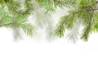 green pine branches isolated on white