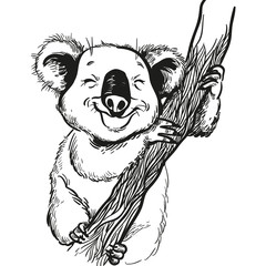 Hand drawn Illustration of  cute koala. vector