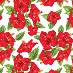 hibiscus flowers tropical seamless pattern