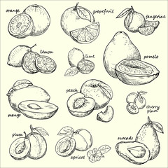Vector collection fruit . Fruit  - vector linear drawing.