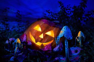 Halloween pumpkin at night in the garden between the fabulous fungi.