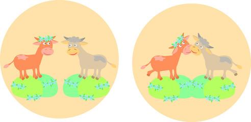 Two cows on meadow fields