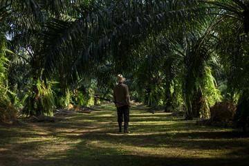 Farmers walk in the palm plantation