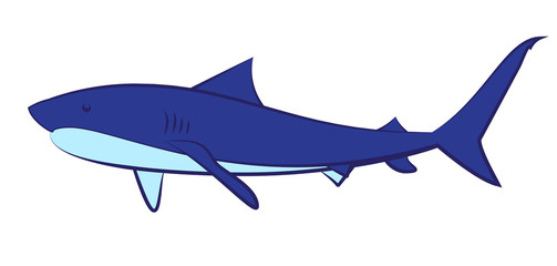 The sharks on a white background. Illustration of a shark vector.
