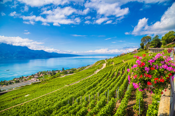 Lavaux wine region at Lake Geneva, Canton of Vaud, Switzerland
