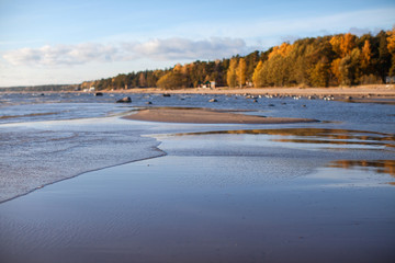 Low tide on a rocky beach with trees in autumn