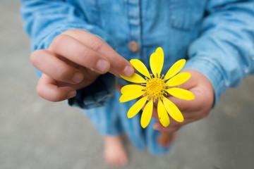 花びらをつまむ子供の手