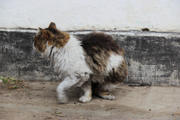 Суровый деревенский кот