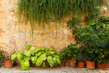 Fototapete - Stone wall with flowers and ivy. Old Italian house background, vintage Italy