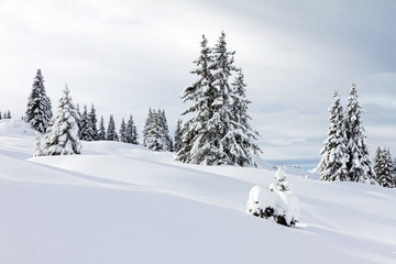 Beautiful fresh powder landscape with pine trees in Les Portes du Soleil in the European Alps