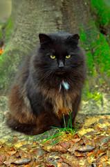 black cat and tree