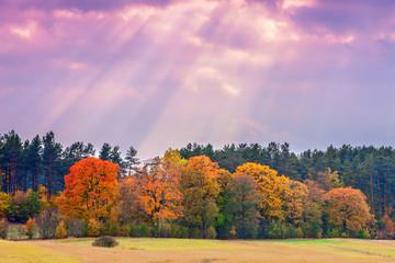 Fototapeta kolory jesieni obraz