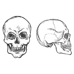 Vector  Sketch Skulls. Side and Front View.