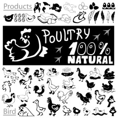 Poultry drawings and icons