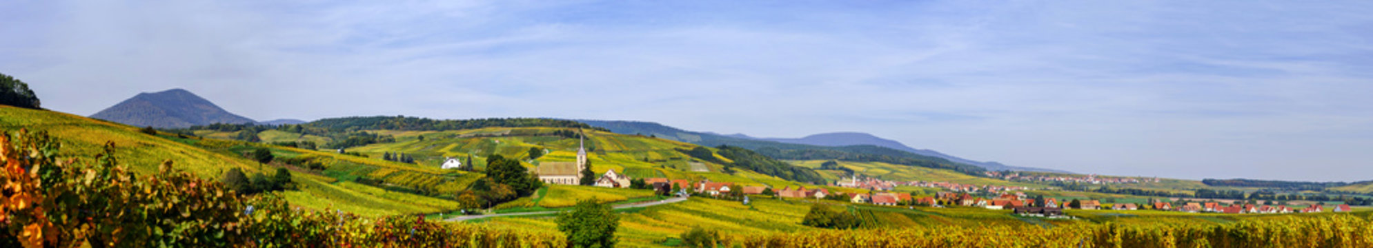 Beautiful colorful vineyards, autumn in Alsace