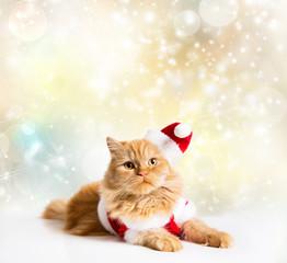 Santa cat golden stars