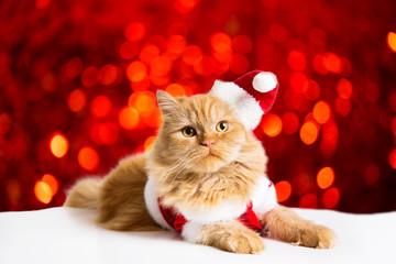 santa cat Flyer