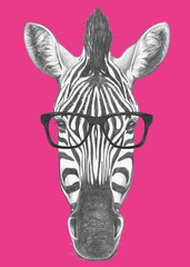 Portrait of Zebra with glasses. Hand drawn illustration.