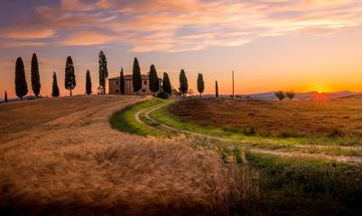 Tuscan cypress Fototapete