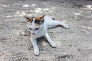 Domestic lovely white cat  lie down pleasantly on cement floor