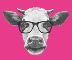 Portrait of Cow with glasses. Hand drawn illustration.