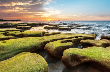 bright sunset and super green moss on rock