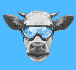Portrait of Cow with ski goggles. Hand drawn illustration.