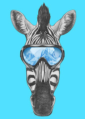 Portrait of Zebra with ski goggles. Hand drawn illustration.