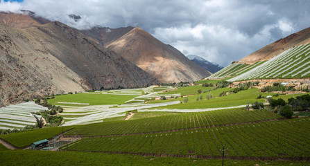 Spring Vineyard in the Elqui Valley, Andes, Chile