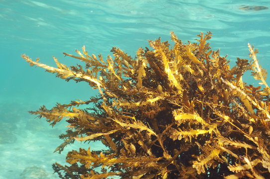 Various forms of kelp plant habitats in the temperate waters of southern Pacific ocean around New Zealand.