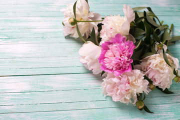 Background with white and pink  peonies flowers