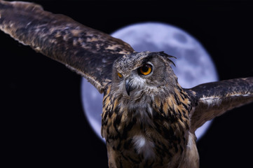 Owl in the night with moon background