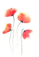 Beautiful poppy flowers on white, watercolor illustrator