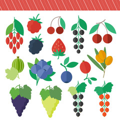 Berries vector elements set
