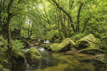 Foto op Plexiglas Pistache Stunning landscape iamge of river flowing through lush green for