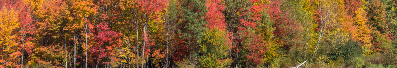 bright autumn colors of fall foliage trees