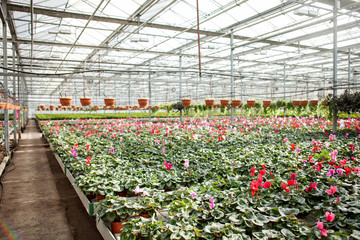 Process of growing up by flowers at greenhouse