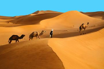 Foto auf AluDibond Wuste Sandig Camels in desert