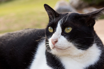 cat looking