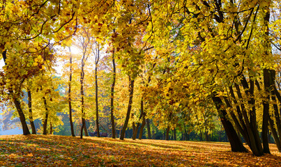 Pak in Fall, Ground Covered with Leaves, Prague