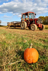 Tractor and Pumpkin in a Pumpkin Patch on a Crisp Autumn Day