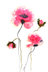 Modern art poppy flowers on white, watercolor illustrator