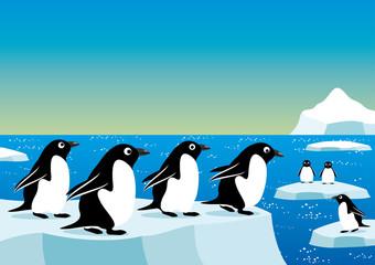 Vector illustration. Penguins.