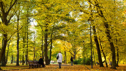 Trees with Yellow Leaves in Park in Fall, Prague